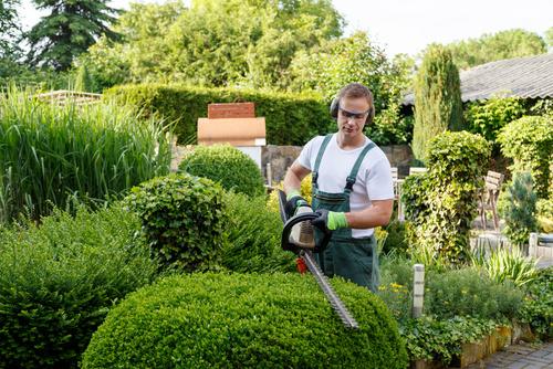 Hecke schneiden Gartenpflege Bielefeld